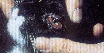 Gemeinsame Calicivirus erfolgreich behandeln beim Hund, Katze und #RB_26