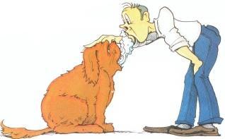Zahnfleisch Entzuendung Erfolgreich Behandeln Beim Hund Katze Und